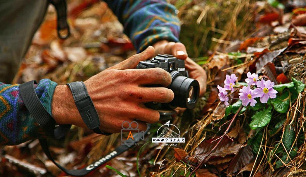 زنبق های جنگلی