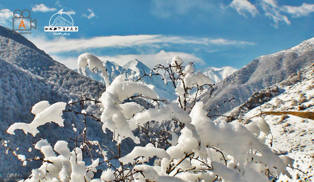 شکوفه های برف و دورنمای قله سیاه کمان